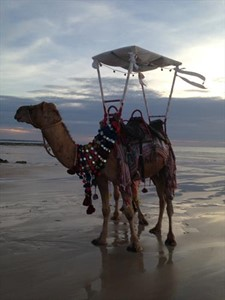 Red Sun Camels Call John Geappen 0419954996