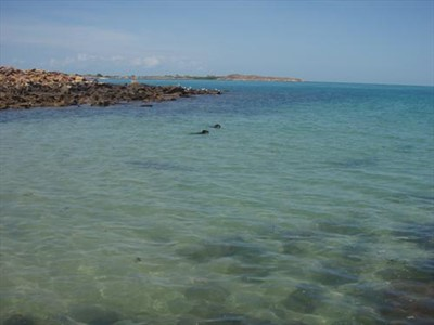 I will also capture the dogs and the sharks playing on the Dampier Peninsula